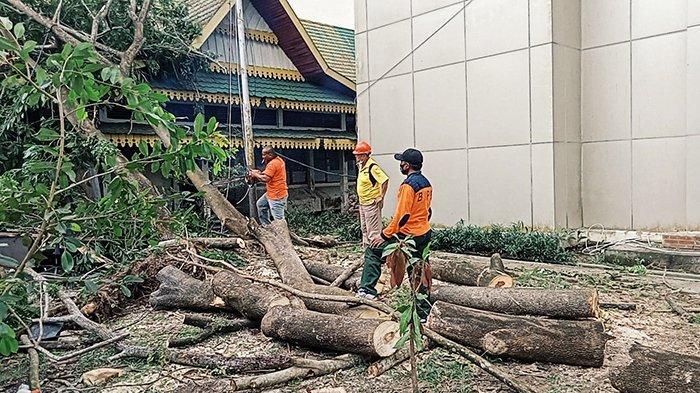 Angin Kencang Akibatkan Pohon Tumbang dan Bangunan Rusak, Ini yang Dilakukan BPBD Inhil Riau