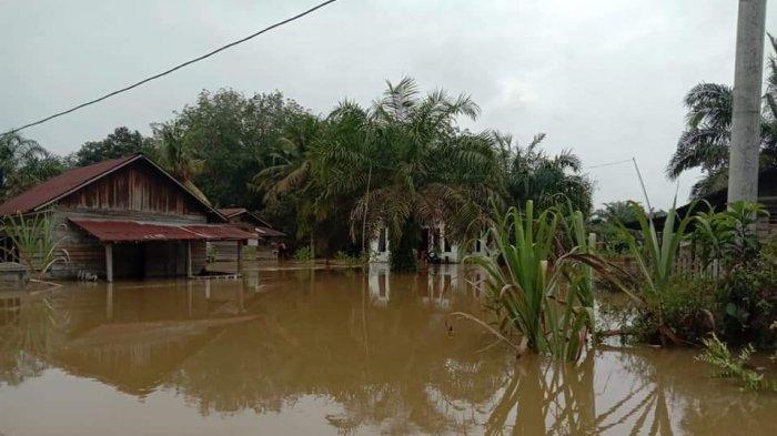 BREAKING NEWS: Banjir Kembali Terjang Desa Ini di Pelalawan Riau, Tinggi Air Hingga 2 Meter Lebih