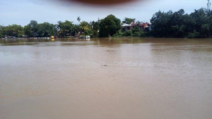 LAGI, BUAYA Muncul di Sungai Siak Pekanbaru Kelurahan Pesisir