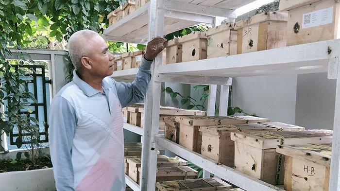 Tergiur Budidaya Lebah Klanceng di Riau?Simak Pengalaman Ruslan Efendi Ini,Sebulan Bisa Raup Segini
