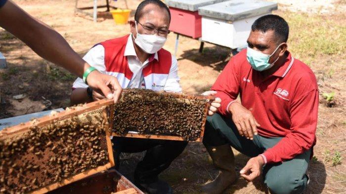 Buah Manis, Budidaya Lebah Madu Ramah Lingkungan