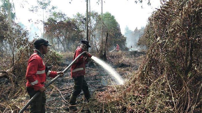 Siang Malam di Lokasi, Petugas Gabungan Berjibaku Padamkan Api, Karhutla di Siak Kian Meluas