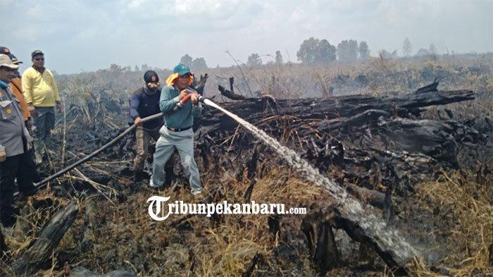 Bupati Harris Ikut Padamkan Api Karhutla di Tanjung Putus, Minta Pemilik Lahan Ikut Berpartisipasi