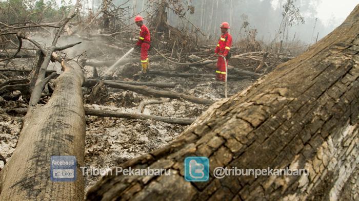 Karhutla Besar di Kawasan Konservasi Giam Siak Kecil Riau, Terkait Perambahan dan Pembalakan Liar?