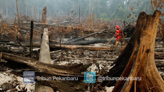 Ratusan Hektar Hutan Suaka Margasatwa Giam Siak Kecil di Riau Terbakar, BBKSDA : Ulah Manusia