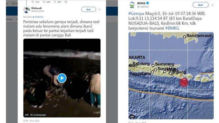 VIDEO VIRALWarga Punguti Ratusan Ikan yang Lompat ke Pantai Canggu, Diduga Sebelum Gempa Bali