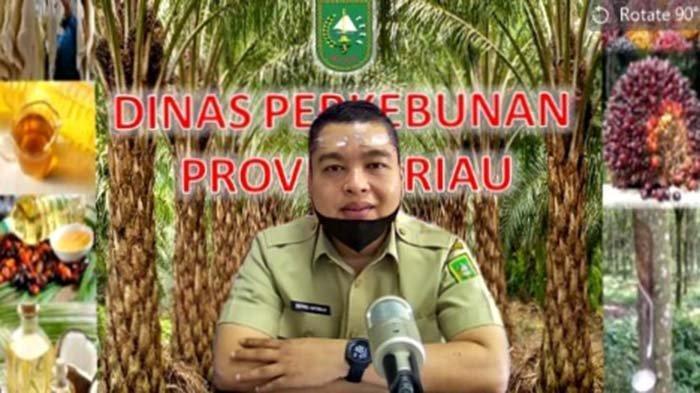 Berapa Harga Bahan Olahan Karet Tingkat Pabrik di Riau Pekan Ini? Simak Rinciannya