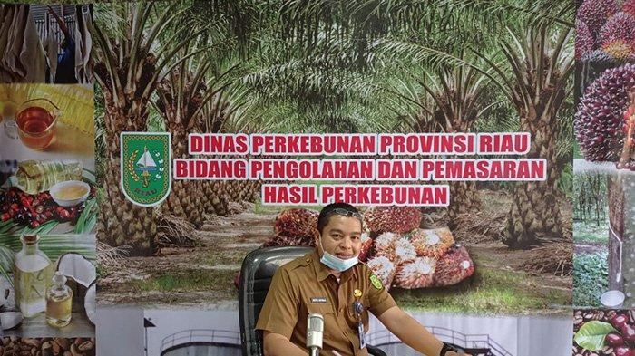 Alhamdulillah, Harga TBS Sawit Riau Pekan Ini Naik 22,79 Per Kilogram, Petani Bisa Tersenyum