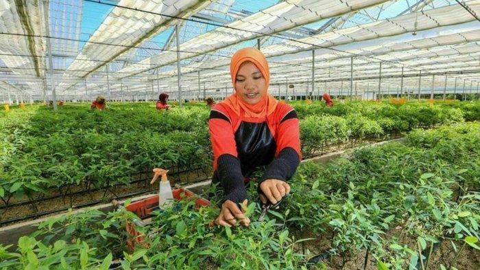 Dipuji Presiden RI Jokowi, Teknologi Nursery PT RAPP Hasilkan Produk Ramah Lingkungan di Riau