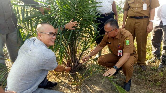 Ferry HC Tinjau Kebun Sawit Hasil Replanting PSR di Rohul