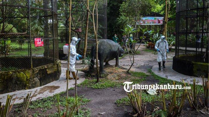 FOTO : Antisipasi Penyebaran Virus Corona, Kebun Binatang Kasam Kulim Disemprot Disinfektan - disinfektan-di-kebun-binatang-kasang-kulim-ok.jpg
