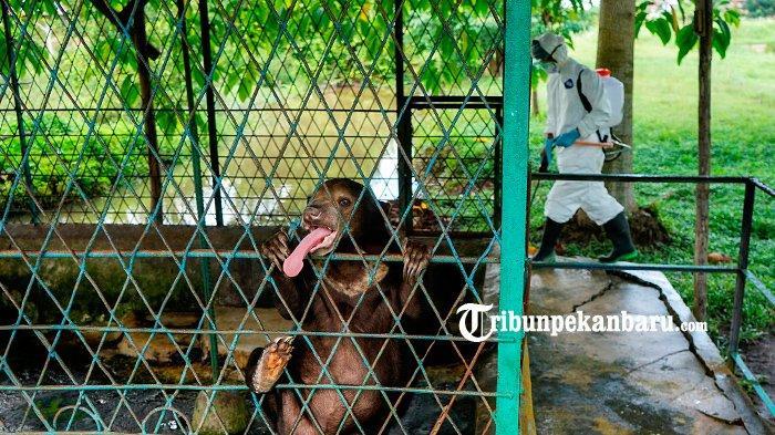 FOTO : Antisipasi Penyebaran Virus Corona, Kebun Binatang Kasam Kulim Disemprot Disinfektan - disinfektan-di-kebun-binatang-kasang-kulim-okee.jpg