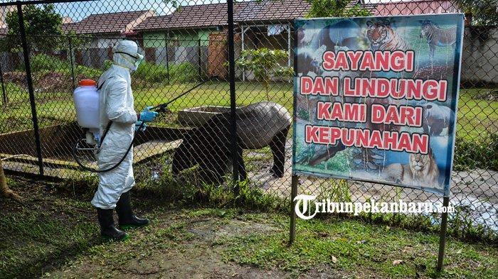FOTO : Antisipasi Penyebaran Virus Corona, Kebun Binatang Kasam Kulim Disemprot Disinfektan - disinfektan-di-kebun-binatang-kasang-kulim.jpg