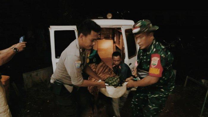 Harimau yang Terkam Warga di Inhil Bakal Dievakuasi. BBKSDA Pasang Box Trap