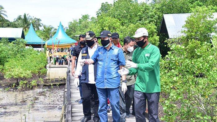 Niat Selamatkan Tempat Sandar Kapal, Nelayan di Bengkalis Sukses Kembangkan Ekowisata Mangrove