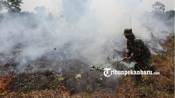 Masih Berasap, Ini Hasil Pantuan Karhutla Rombongan Menteri LHK di Tiga Wilayah di Riau