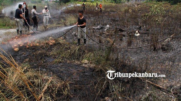 FOTO: Kebakaran Lahan di Jalan Bundo Kandung Pekanbaru - foto_kebakaran_lahan_di_jalan_bundo_kandung_pekanbaru_1.jpg