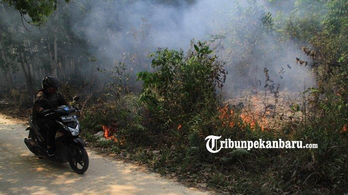 Musim Kemarau 2020 di Riau, Pengamat: Harus Ada Upaya Komprehensif Pencegahan Kebakaran Lahan