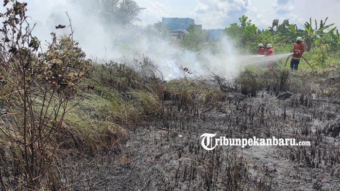 FOTO: Kebakaran Lahan di Pekanbaru, Api Diduga dari Pembakaran Sampah - foto_kebakaran_lahan_di_pekanbaru_api_diduga_dari_pembakaran_sampah_2.jpg