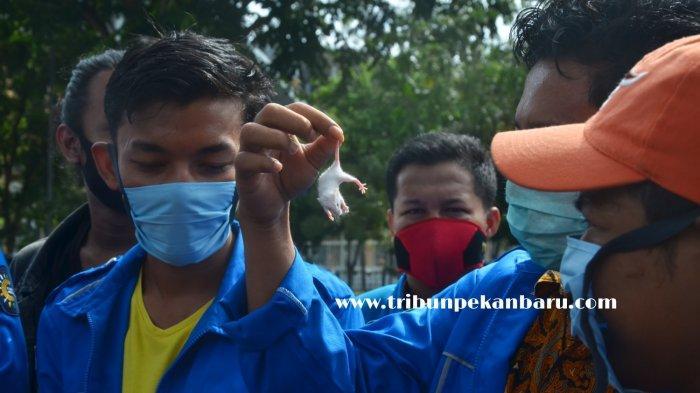 Kecewa Kasus Korupsi Di SP3, Mahasiswa Unjuk Rasa Sambil Bawa Tikus Putih: Kejati Riau Masuk Angin!