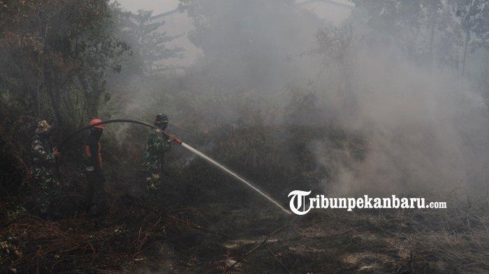 Hukuman Penjara Paling Lama 10 Tahun Bagi Pelaku Pembakar Lahan, Komitmen Riau Bebas Karhutla