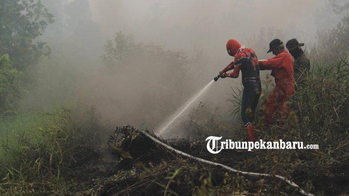 Sudah 40 Hektare Terbakar, Karhutla Terluas di Kabupaten Kampar Riau Ada di Kecamatan Tambang