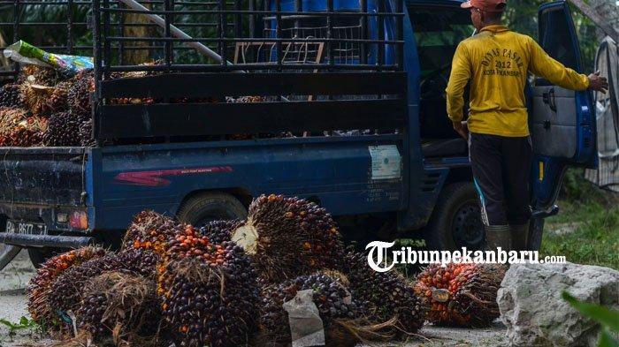 Saat Pandemi Covid-19, Perekonomian Riau Tumbuh Positif di Triwulan 1 2020, Tapi Tunggu Dulu!