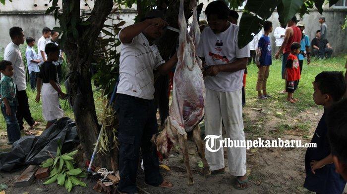 FOTO: Pemotongan Hewan Kurban di Rumbai Pesisir Pekanbaru Berlangsung Lancar - foto_pemotongan_hewan_kurban_di_rumbai_pesisir_pekanbaru_berlangsung_lancar_4.jpg