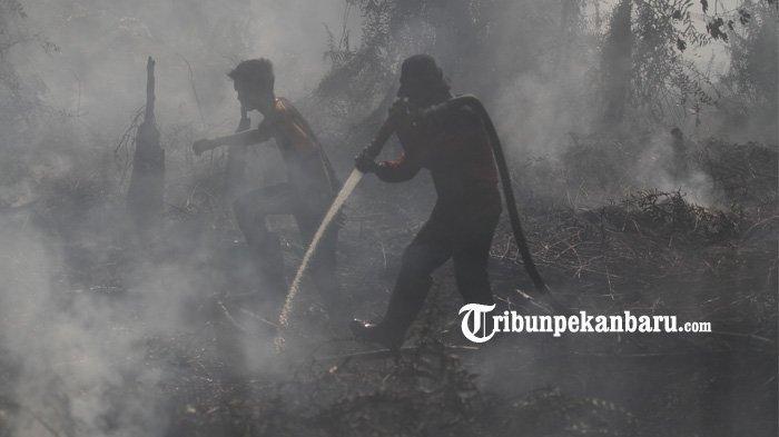 UPDATE: 26 Pelaku Pembakar Lahan di Riau Ditangkap dan Dijadikan Tersangka