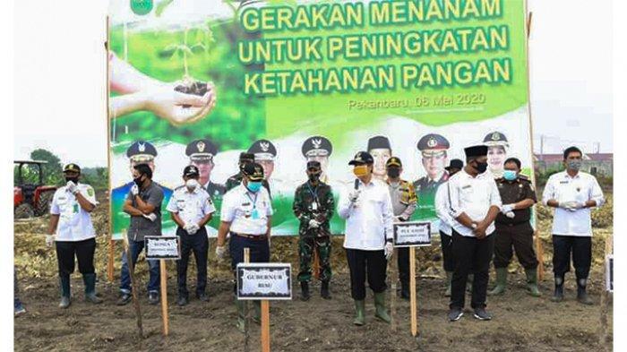 Dukung Program Ketahanan Pangan, Pemerintah Kabupaten Kampar Sediakan Lahan 10 Ha untuk Tanam Jagung