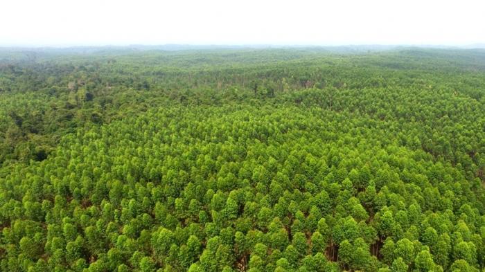DLHK Riau Buka-bukaan Soal Rencana Peningkatan Kapasitas Produksi PT RAPP, Sebut Kayu dari Luar Riau