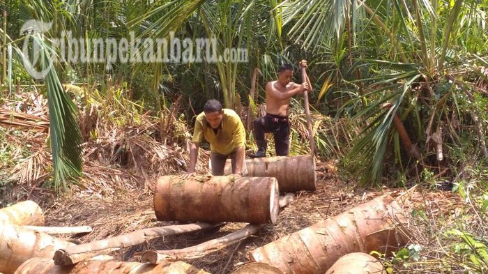 Meranti Riau yang Punya Sagu Namun Negeri Jiran Malaysia yang Punya Nama