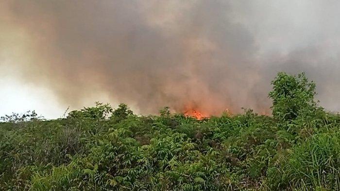 Hotspot di Riau Menggila Capai 55 Titik, Kebakaran Hutan dan Lahan Sudah Mulai di Rohil