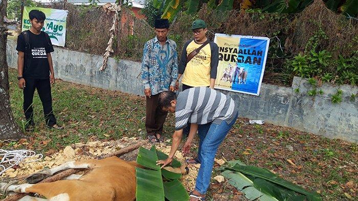 Idul Adha 1440 H, PKPU Human Initiative Bersama Tribun Pekanbaru Salurkan Tiga Ekor Hewan Kurban