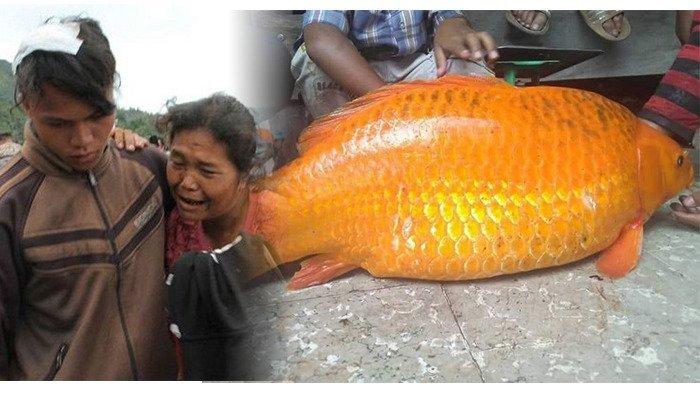 Guru Spiritual Sebut Ikan Mas 'Raksasa' Danau Toba Ditangkap dan Dibunuh Penyebab Badai Dahsyat