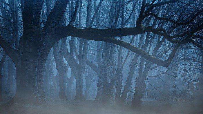 Hilang saat Magrib, Tubuh Pria Ini Ditemukan di Atas Pohon, Kok Bisa? Begini Cerita Warga Sekitar