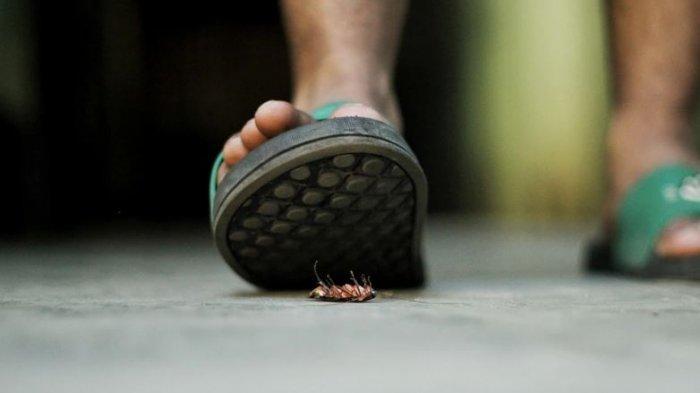 18 Kali Pindah Rumah karena Istri Takut Kecoa, Suami Akhirnya Kesal dan Pilih Lakukan Jalan Ini