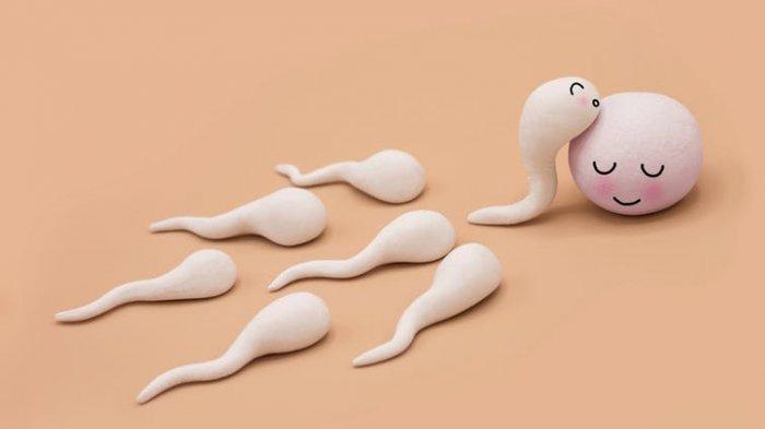 Terobosan Alat Kontrasepsi: Jebak Sperma dengan Anti bodi & Kehamilan Tertunda