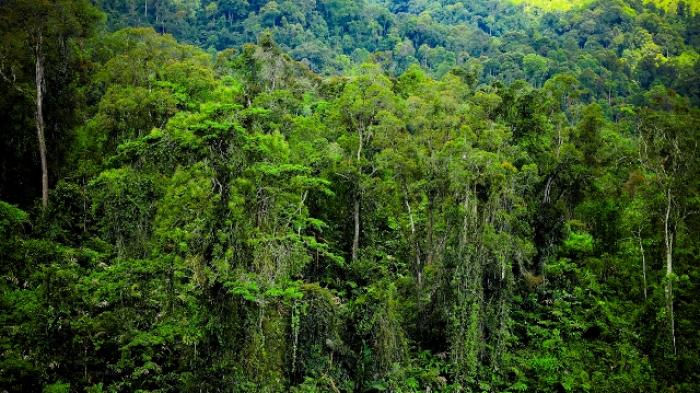 YLBHR Ungkap PT. Tasma Puja Kuasai Kawasan Hutan Hampir 1.000 Hektare