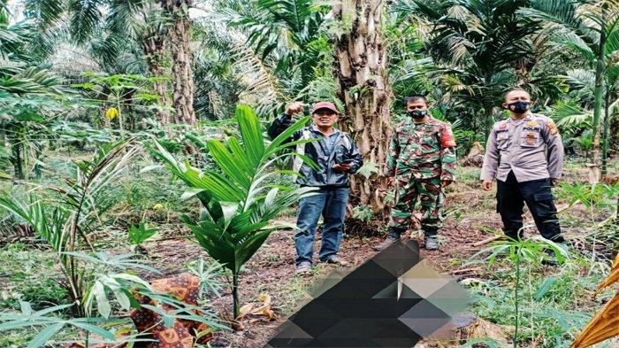 Lokasi penemuan jasad seorang perempuan paruh baya di Dusun 2 Desa Bayas Jaya, Kecamatan Kempas, Kabupaten Indragiri Hilir (Inhil), Riau, Sabtu (27/3).