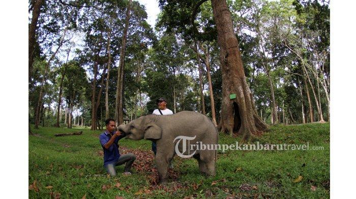 Bermain dengan Gajah di TWA Buluh Cina Sambil Nikmati Pemandangan Alam, Ada 7 Danau