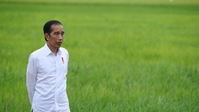 Heboh Jokowi Bakal Reshuffle Kebinet Besok? 6 Menteri Bakal Diganti Sosok Baru?