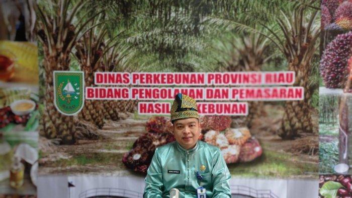 Naik Rp 400 dari Minggu Lalu, Harga Bahan Olahan Karet di Tingkat Pabrik di Riau Jadi Segini