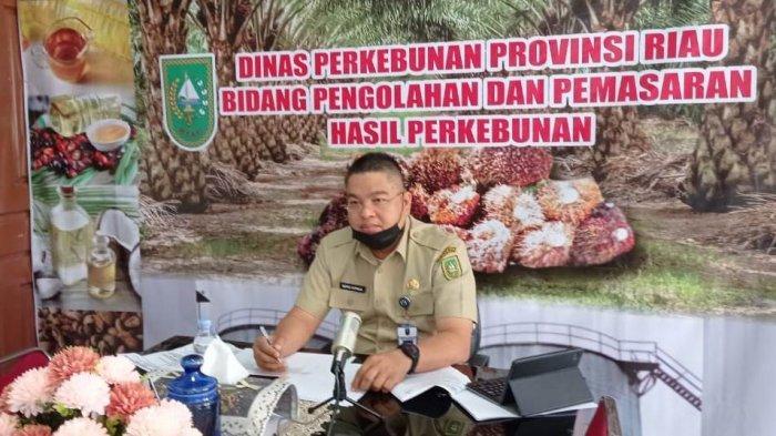 Harga TBS Sawit Riau Naik Lagi, Pekan Ini Dibanderol Rp2.370,57 Per Kg, Berikut Daftar Lengkapnya