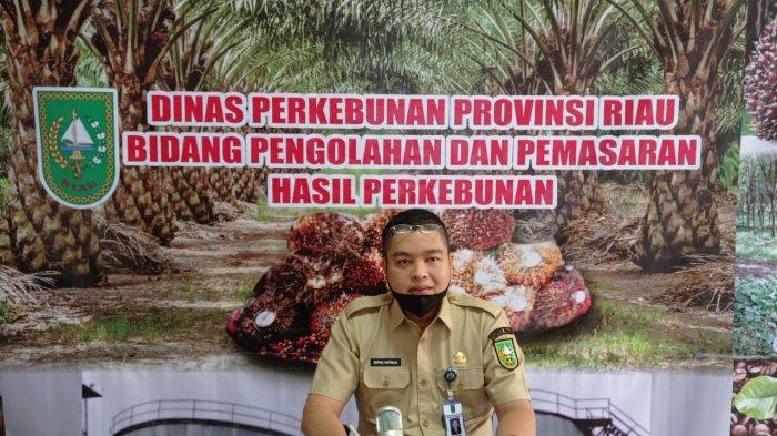 Pekan Ini Harga TBS Sawit di Riau Pecah Rekor dengan Harga Tertinggi Capai Rp 3.014 Per Kilogram