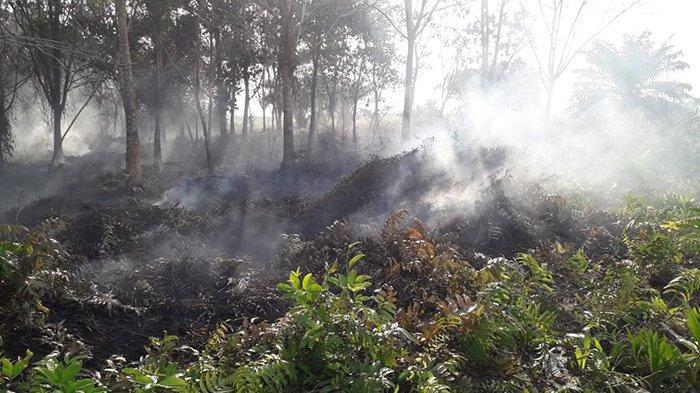 Besok, Gubri Syamsuar Tetapkan Status Siaga Darurat Karhutla di Riau