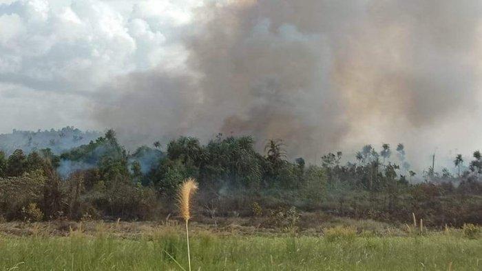 Karhutla Sejak Awal 2020 di Wilayah Bintan Sudah Hanguskan Sekitar 15 Hektare