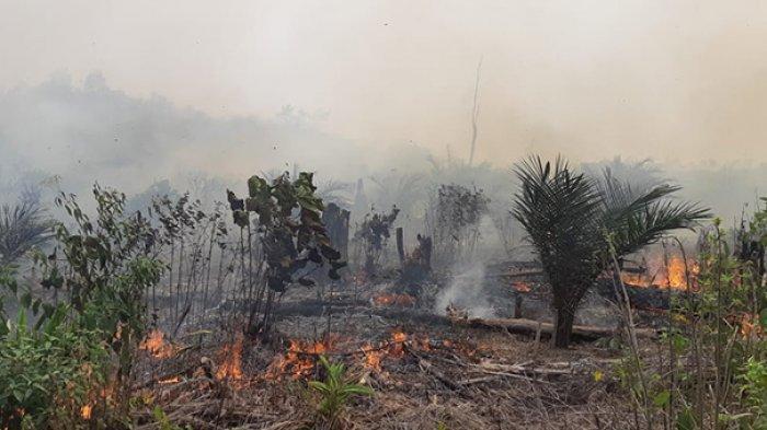 342 Hektar Hutan dan Lahan Terbakar di Dumai dalam Peristiwa Karhutla di Riau pada Pertengahan 2019