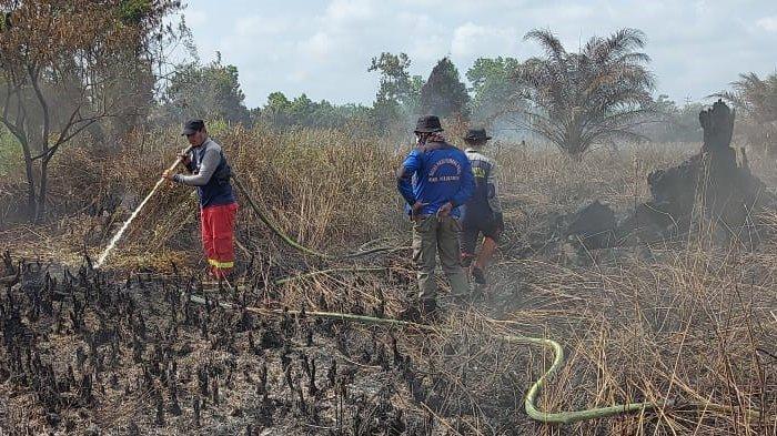 Sudah 50 Hektar Lahan di Pelalawan Terbakar, Besok Pemda Tetapkan Status Siaga Darurat Karhutla
