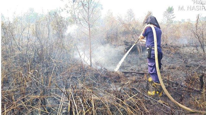 Karhutla di Pelalawan Padam, Personil Gabungan Lakukan Pendinginan & Patroli di Lahan Bekas Terbakar